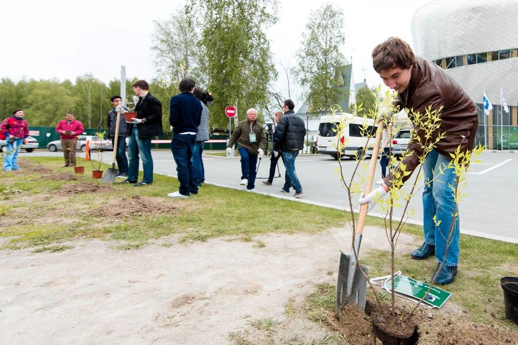 Процесс посадки саженцев деревьев